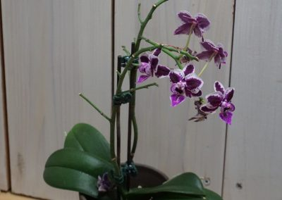 1st: A 1. 1 Orchid